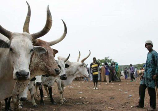 Fulani ruga settlement in nigeria